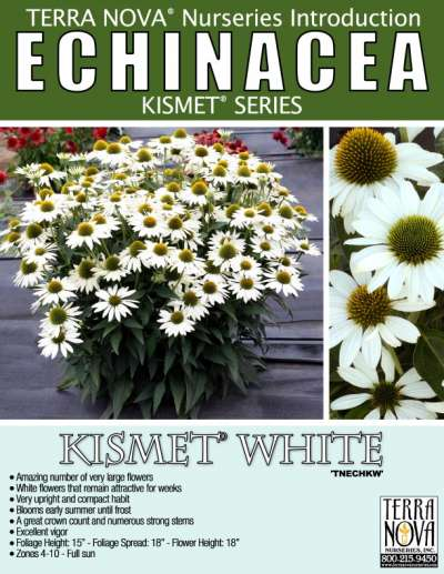 Echinacea KISMET® White - Product Profile