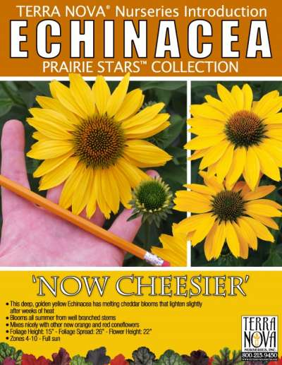 Echinacea 'Now Cheesier' - Product Profile