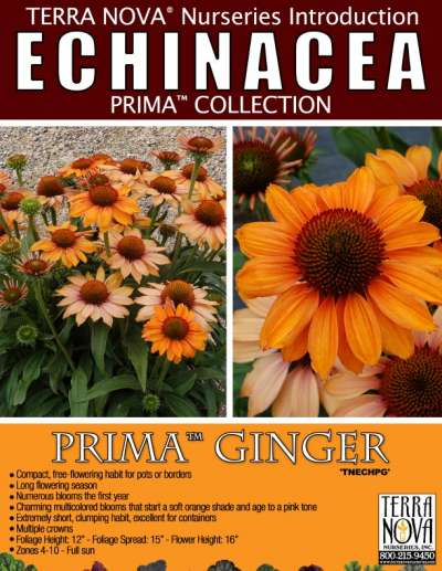 Echinacea PRIMA™ Ginger - Product Profile