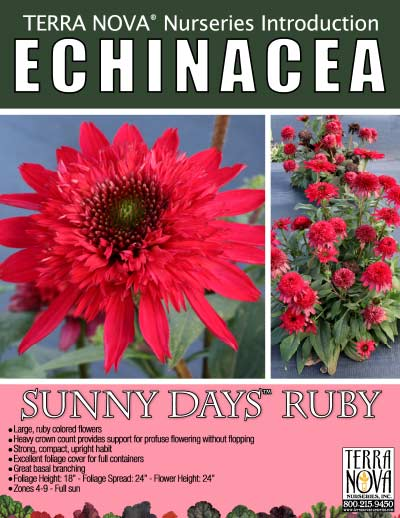 Echinacea SUNNY DAYS™ Ruby - Product Profile