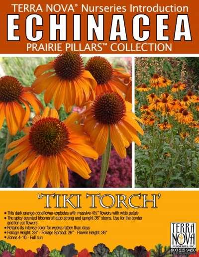 Echinacea Tiki Torch Product Profile