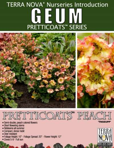 Geum PRETTICOATS™ Peach - Product Profile