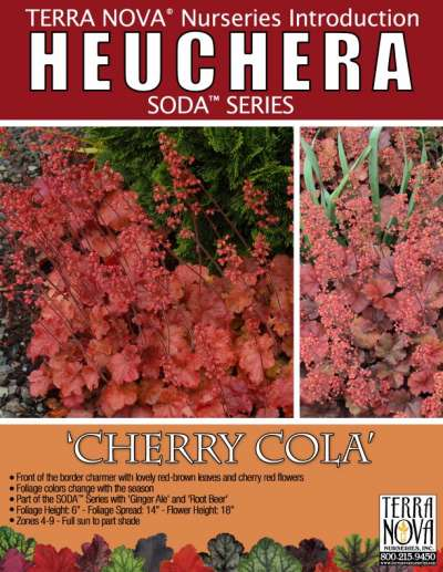 Heuchera 'Cherry Cola' - Product Profile
