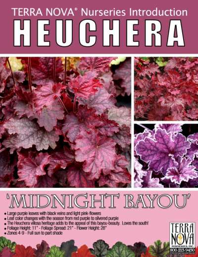 Heuchera 'Midnight Bayou' - Product Profile