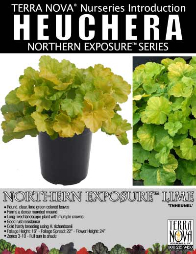 Heuchera NORTHERN EXPOSURE™ Lime - Product Profile