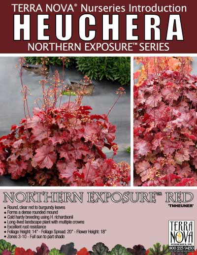 Heuchera NORTHERN EXPOSURE™ Red - Product Profile