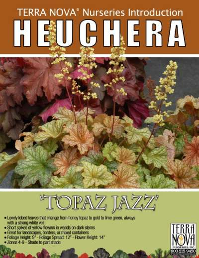 Heuchera 'Topaz Jazz' - Product Profile
