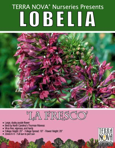 Lobelia 'La Fresco' - Product Profile