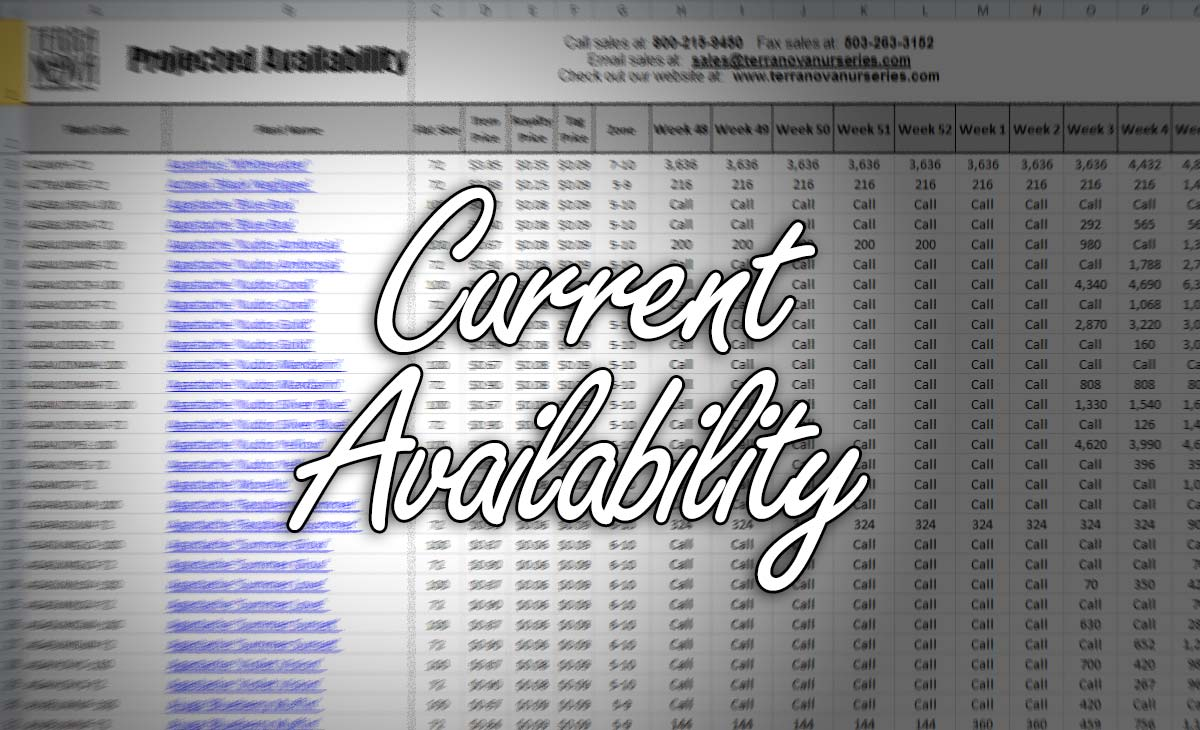 Current Availability