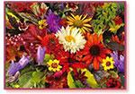 Creating Color, or How TERRA NOVA® Turns Ordinary Plants into Superstars