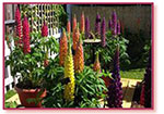 The Greatest Garden Shows on Earth