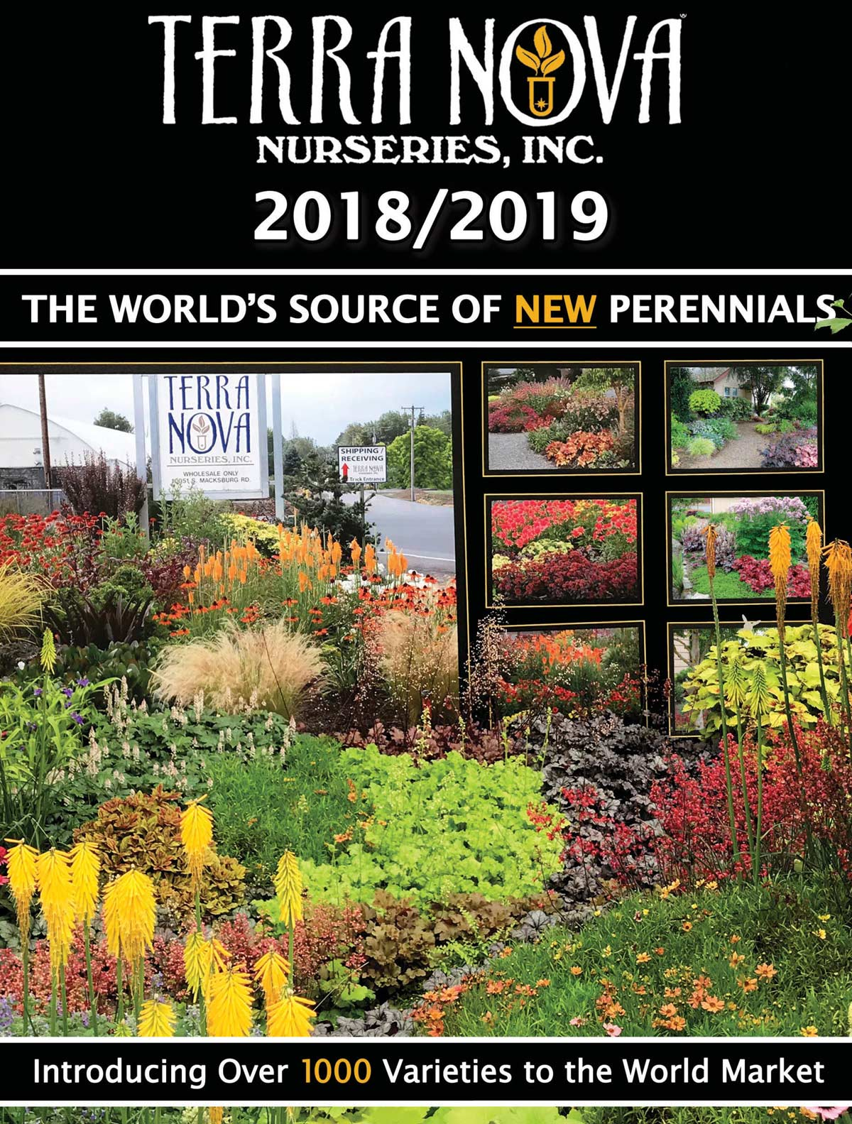 Terra Nova Nurseries Inc The World Leader In Plant Breeding