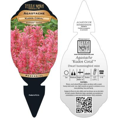Agastache 'Kudos Coral' - Tag