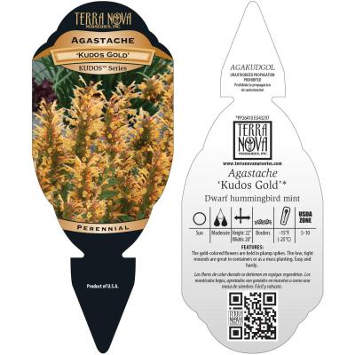 Agastache 'Kudos Gold' - Tag