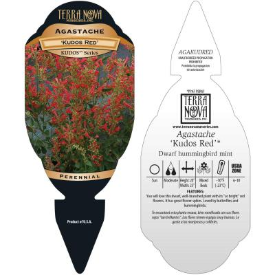 Agastache 'Kudos Red' - Tag