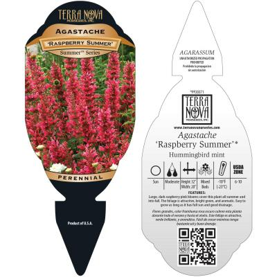 Agastache 'Raspberry Summer' - Tag