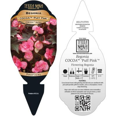 Begonia COCOA™ 'Puff Pink' - Tag