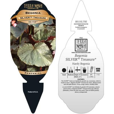 Begonia SILVER™ Treasure - Tag
