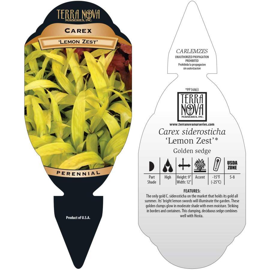 Carex 'Lemon Zest'