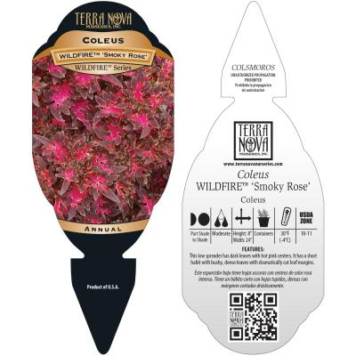 Coleus WILDFIRE™ 'Smoky Rose' - Tag