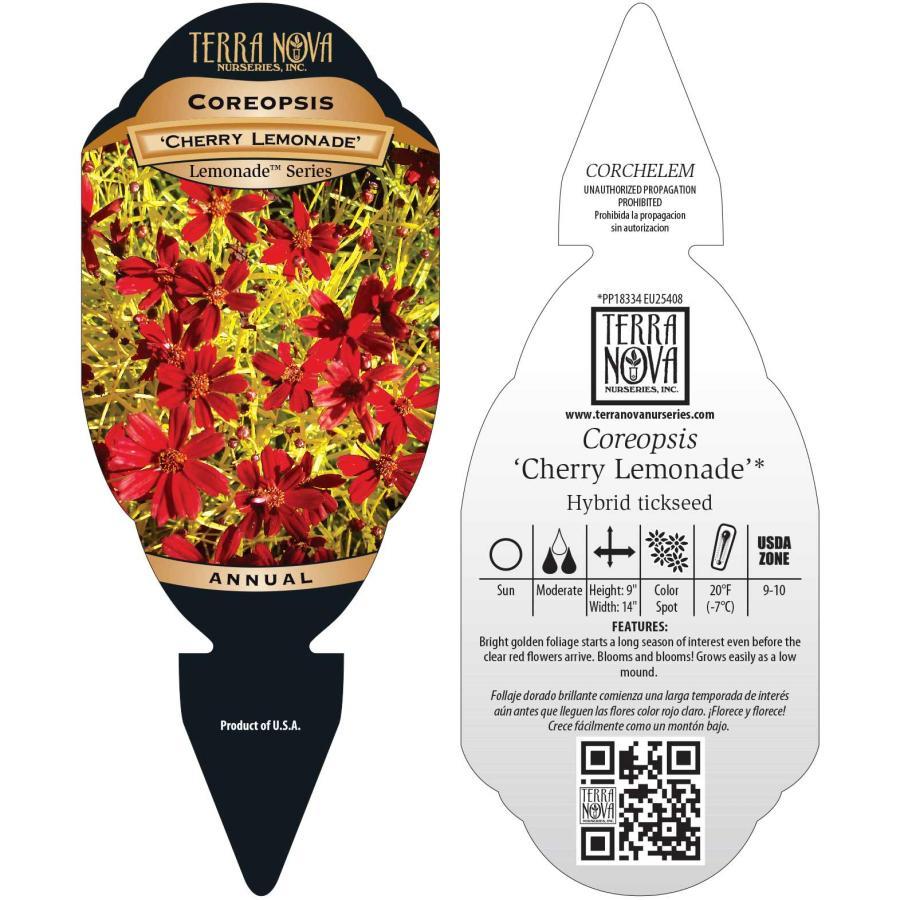 Coreopsis 'Cherry Lemonade'