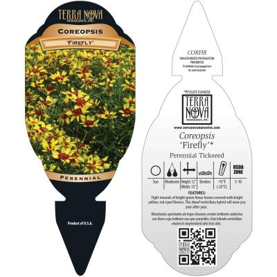Coreopsis 'Firefly' - Tag