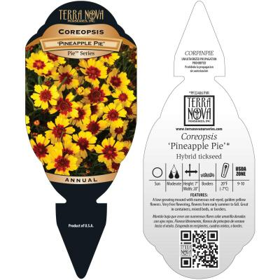 Coreopsis 'Pineapple Pie' - Tag
