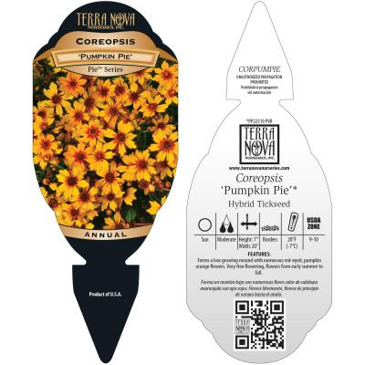 Coreopsis 'Pumpkin Pie' - Tag