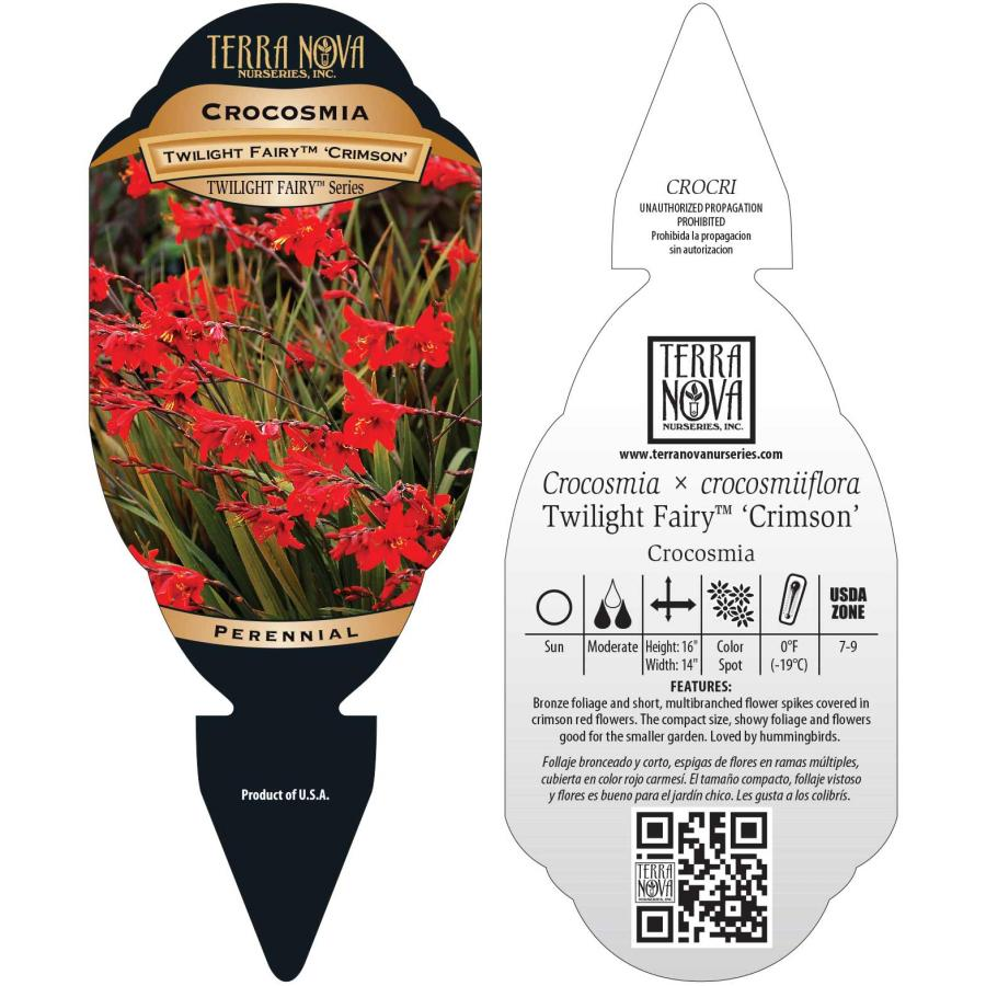 Crocosmia TWILIGHT FAIRY™ Crimson