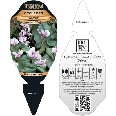 Cyclamen SWEETHEART™ 'Silver' - Tag