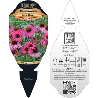 Echinacea 'Dixie Belle' - Tag