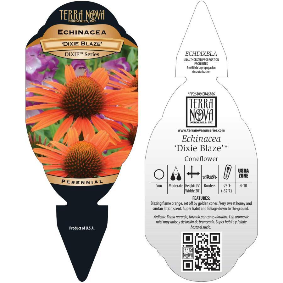 Echinacea 'Dixie Blaze'
