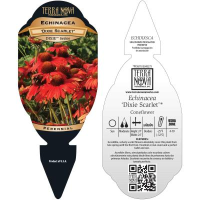 Echinacea 'Dixie Scarlet' - Tag