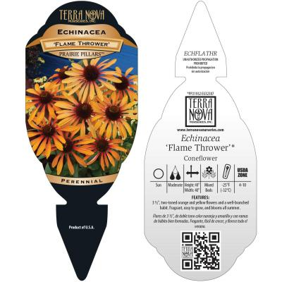 Echinacea 'Flame Thrower' - Tag