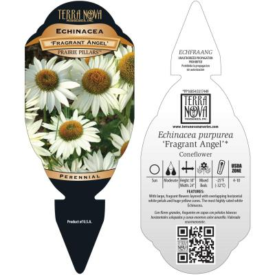 Echinacea 'Fragrant Angel' - Tag