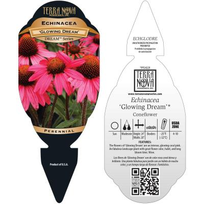 Echinacea 'Glowing Dream' - Tag