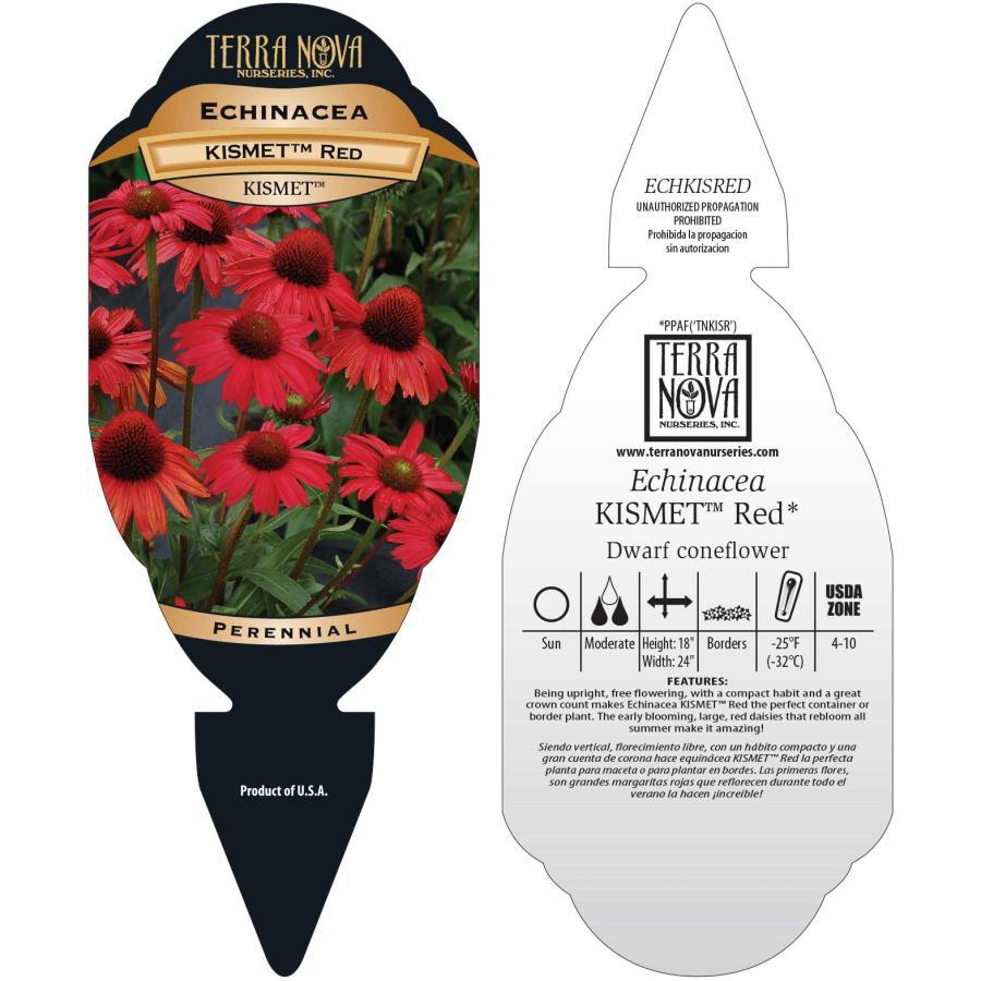 Echinacea KISMET™ Red