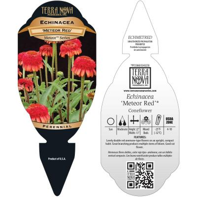 Echinacea 'Meteor Red' - Tag