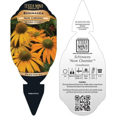 Echinacea 'Now Cheesier' - Tag