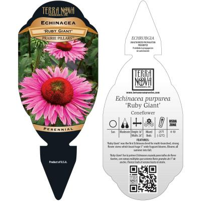 Echinacea 'Ruby Giant' - Tag