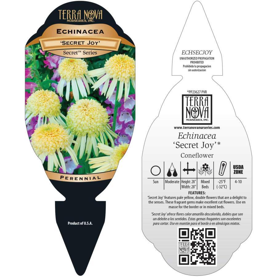 Echinacea 'Secret Joy'