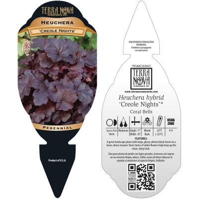 Heuchera 'Creole Nights' - Tag