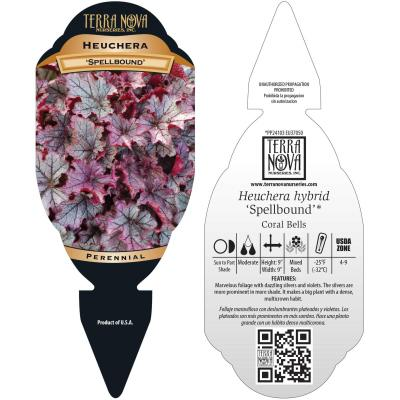 Heuchera 'Spellbound' - Tag