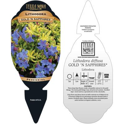 Lithodora Gold 'N Sapphires - Tag