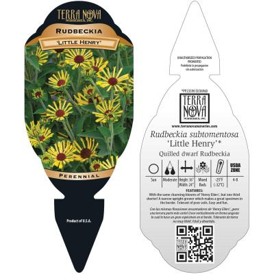 Rudbeckia 'Little Henry' - Tag