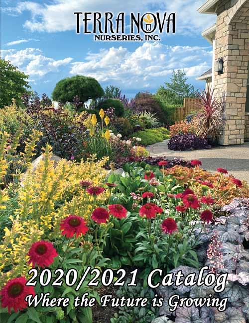 2020 / 2021 Catalog