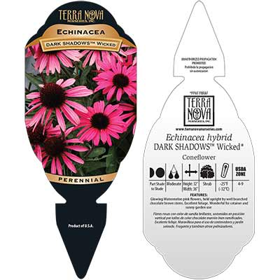 Echinacea DARK SHADOWS™ Wicked - Tag