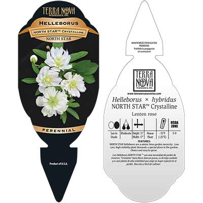 Helleborus NORTH STAR™ Crystalline - Tag