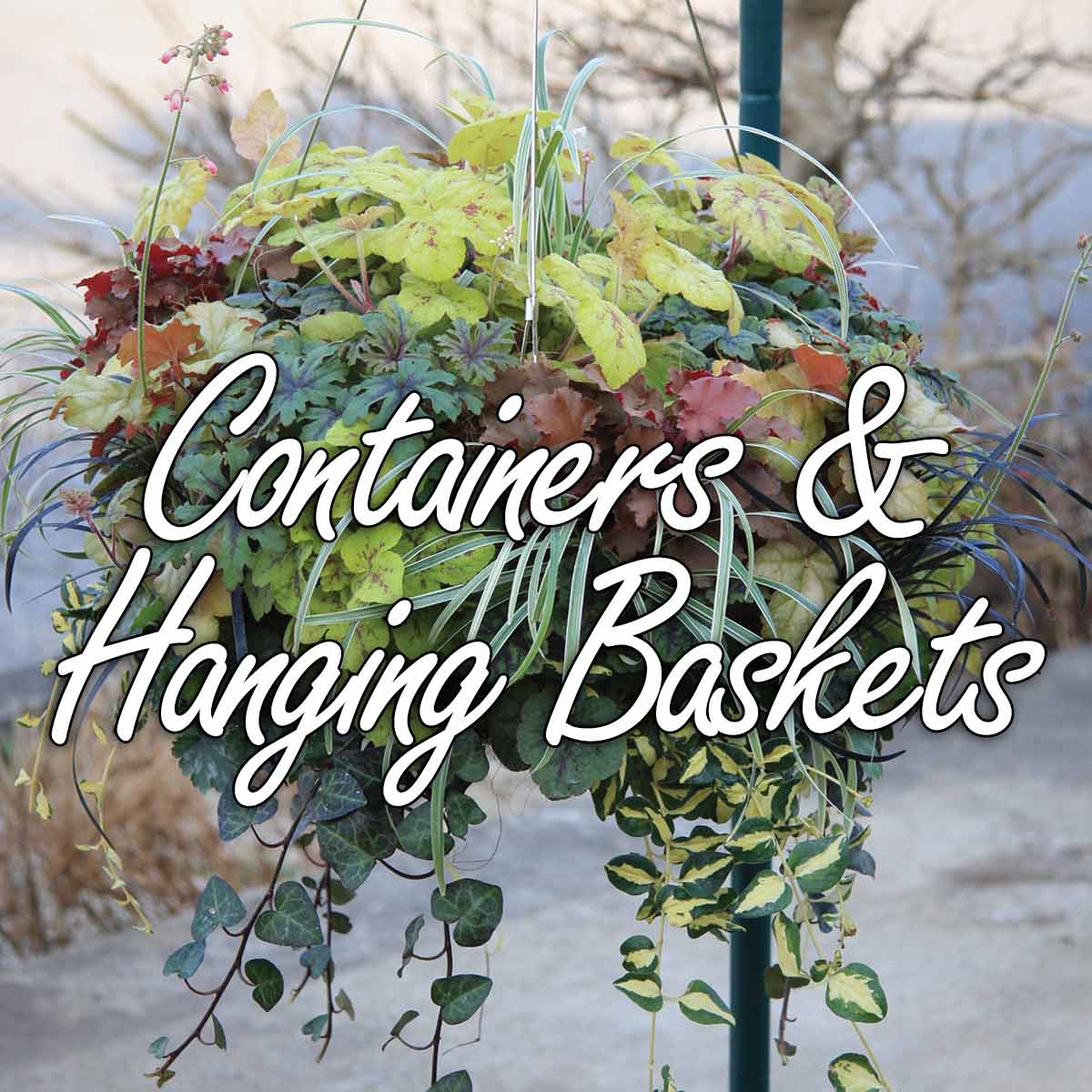 Containers & Hanging Baskets