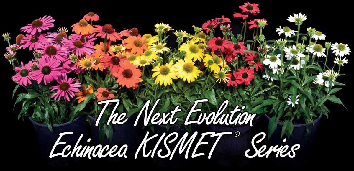 The Next Evolution - Echinacea KISMET® Series